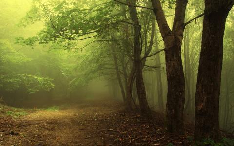 阴凉的森林,清新