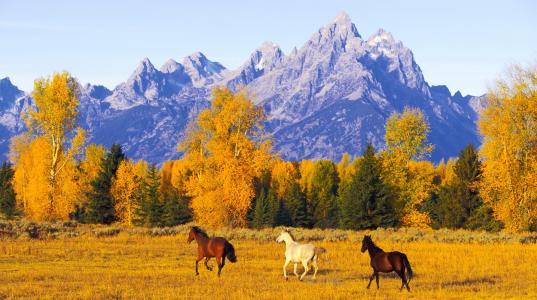 秋天,自由,马,山,空间