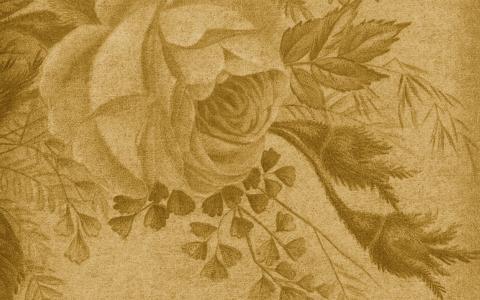 纹理,玫瑰,葡萄酒