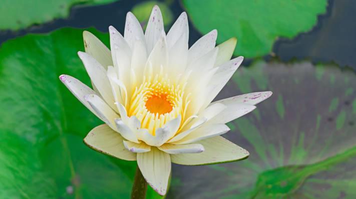 浅焦点摄影镜头的白色和黄色的花朵高清壁纸