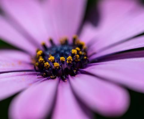 紫色的花高清壁纸的特写照片