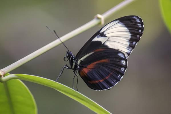 选择性摄影的绿色的叶子上的白色和黑色的蝴蝶高清壁纸