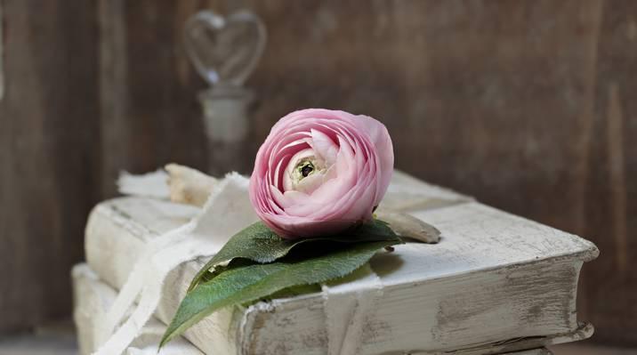 粉红色的玫瑰白色精装书高清壁纸