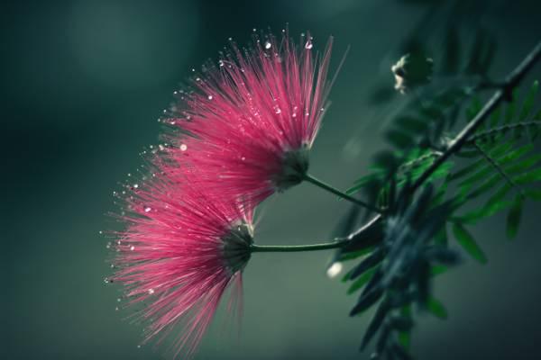 桃红色petaled花特写镜头照片HD墙纸