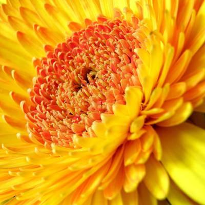 黄色花卉高清壁纸