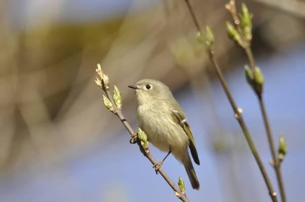 在树干的灰色鸟高清壁纸