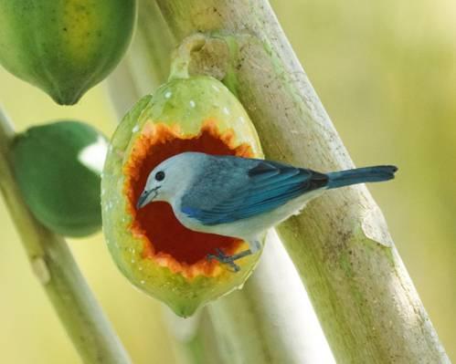 蓝色和白色的短嘴鸟浅景深摄影,唐纳格高清壁纸