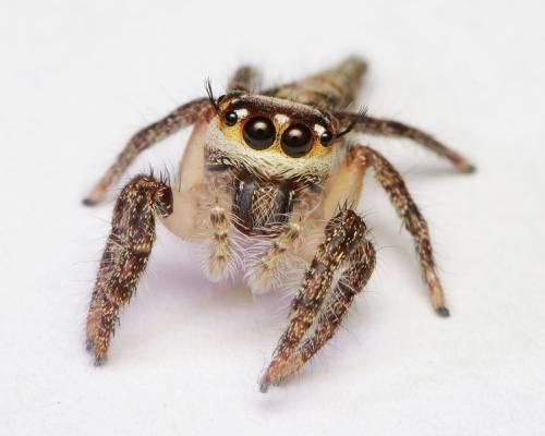 关闭蜘蛛的照片,跳跃的蜘蛛高清壁纸