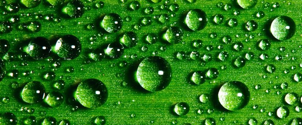 绿叶与水露水高清壁纸