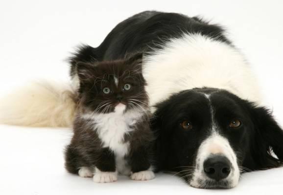 黑色和白色,小猫,狗