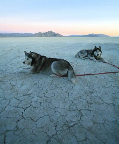 两个阿拉斯加阿拉斯加雪橇犬与开放领域高清壁纸上的红色皮带