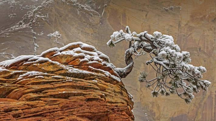 树,岩石,锡安国家公园,雪,犹他州,美国