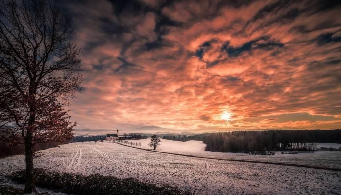 天空,雪,场,冬天,树,日落