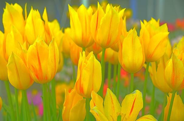黄色和绿色的花朵高清壁纸
