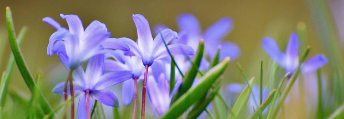在白天的高清壁纸紫色花浅重点摄影