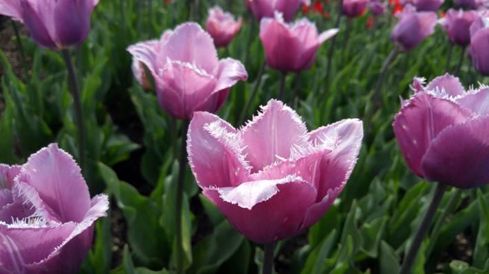 粉红色的花瓣花高清壁纸的特写照片