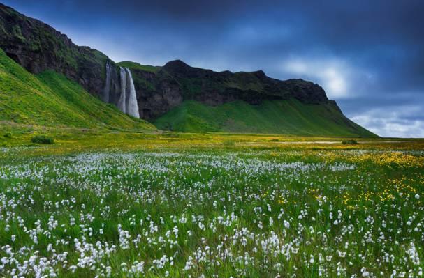 冰岛,岩石,鲜花,草,瀑布
