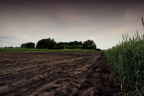 晚上,阴,扎尔扎克,田野,草地,燕麦