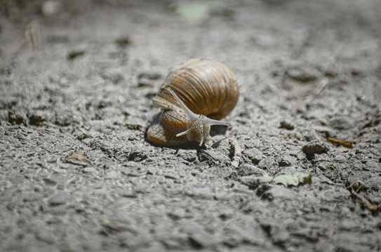 蜷缩在壳里的蜗牛图片