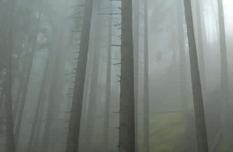 森林, 雾, 早上, 雾, 幻想, 秋天, 叶子