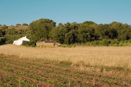 农村, 阿连特茹, 葡萄牙, 农村