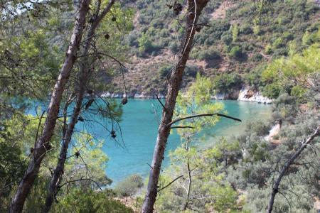 土耳其, muğla, akbuk, 自然, 森林, 海洋