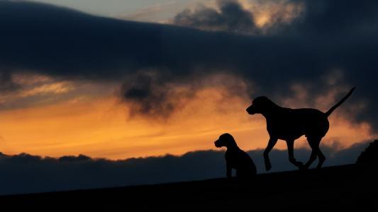 剪影, 两只狗, 日落, 黄昏, 动物主题, 天空, 一种动物