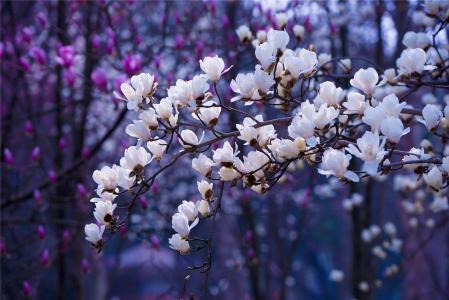 小清新, 美丽, 花, 阳光, 光明