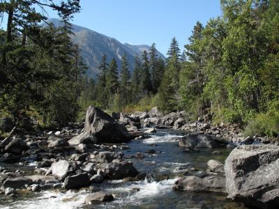 山, 克里克, 徒步旅行, 自然, 水, 流, 森林