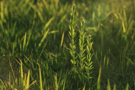 植物, 绿色, 小清新, 草