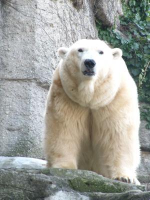 北极熊, 熊, 动物世界, 甜, 熊, 动物园, 休息