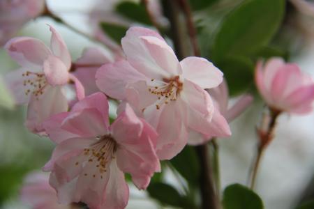小清新, 花, 春天