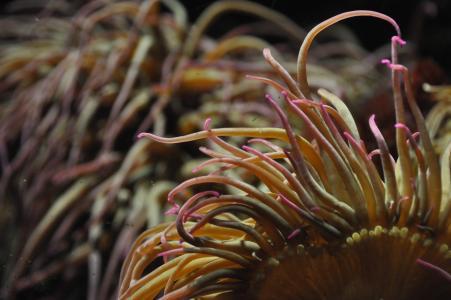 珊瑚, 粉色, 水世界, 自然, 水下, 礁