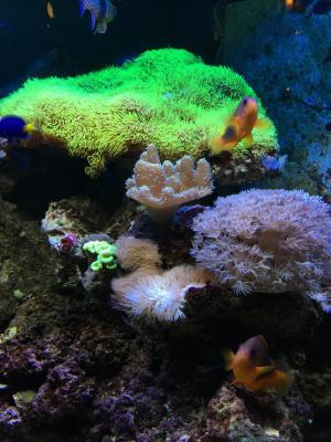 鱼, 水, 水族馆, 海底世界, 玩具