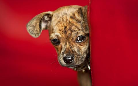 小狗充分的高清壁纸和背景
