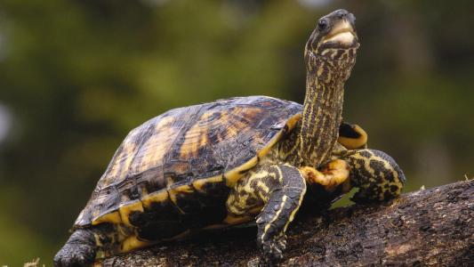 龟与长长的脖子